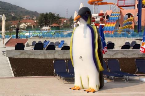Penguin Shower